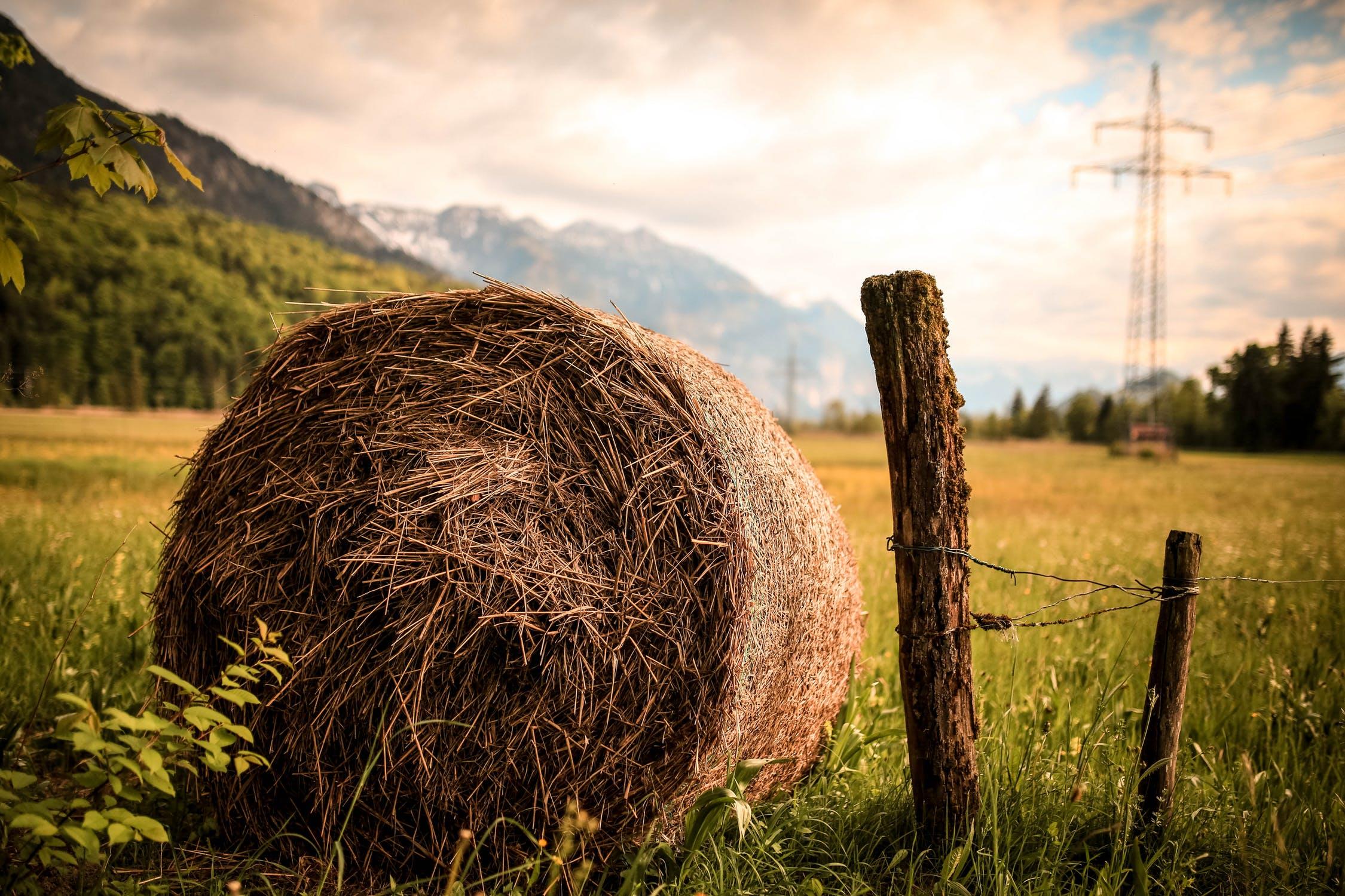 Blockchain wykorzystany w rolnictwie